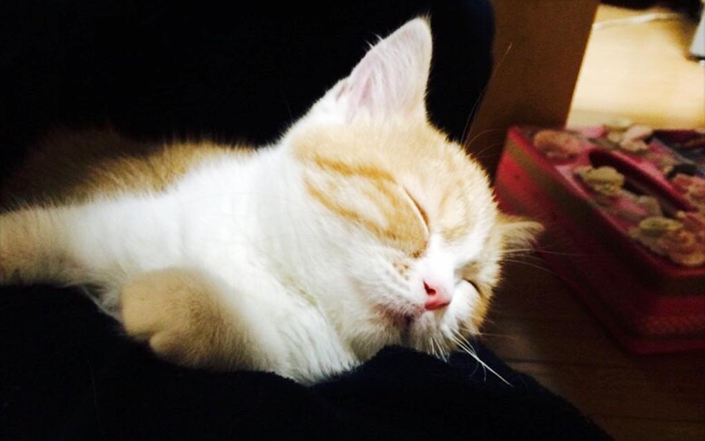 川崎市の猫と過ごせるデイサービス 猫のいる家